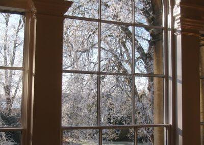Из окна видно одно из самых старых деревьев Европы в школьном дворе