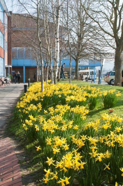East Sussex College на кампусе Lewes
